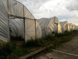 Organische Cityfarm im Uit Je Eigen Stad in Rotterdam