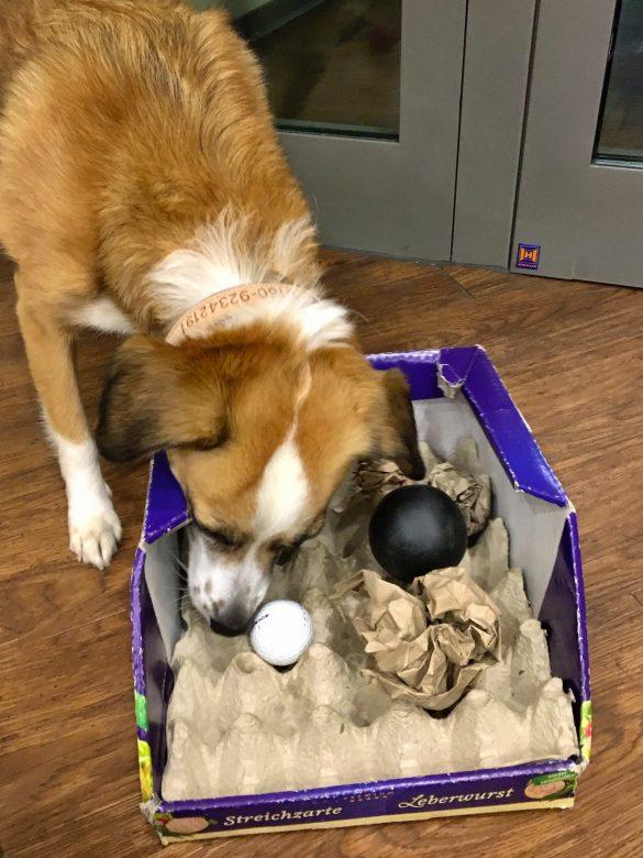 Karton mit Bällen als Hundespielzeug