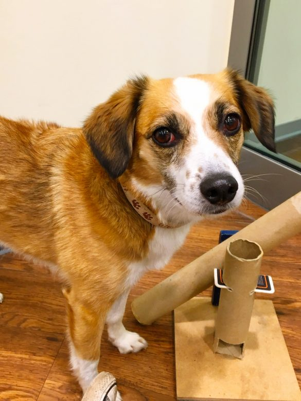 Hund mit Hundespielzeug