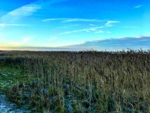Zwischen Heide und Hafer auf Sylt
