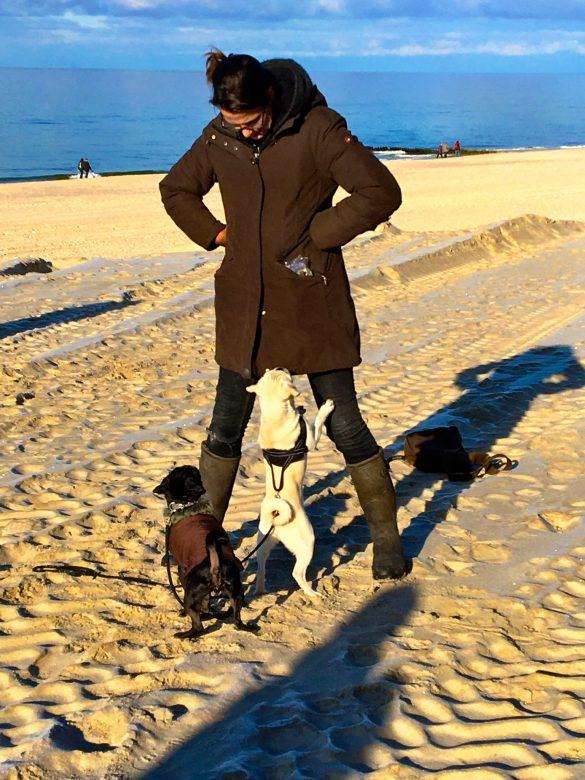 Hundetraining am Strand
