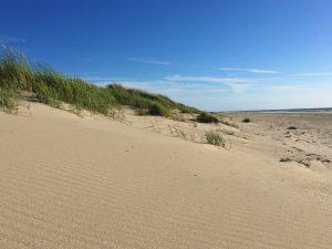 Strand und Dünen auf Texel