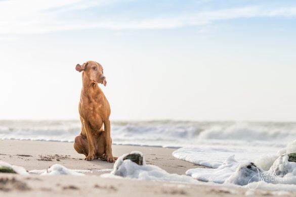 Hund sitzt am Sylter Strand