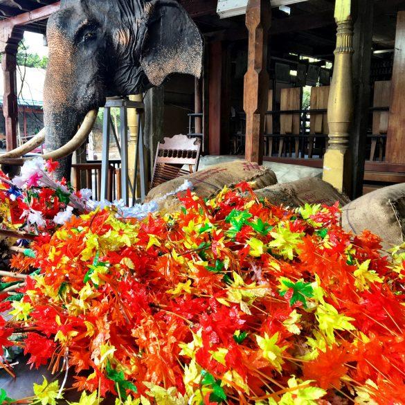 Blumenmeer vor heiligem Elefant im Gangaramaya Heiligtum auf Sri Lanka