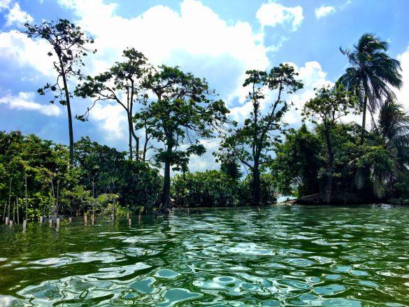 Dschungellandschaft am Rio Dulce