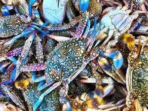 Krebse auf dem Fischmarkt