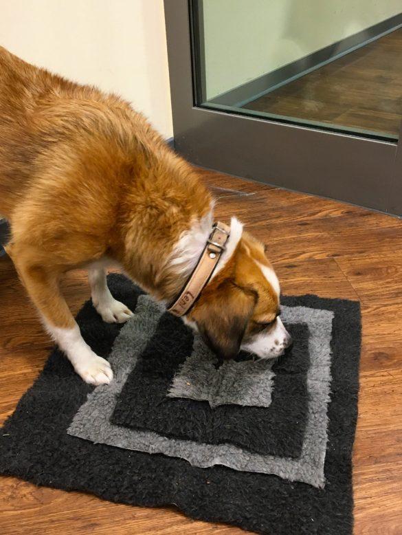 Teppichflicken als Hundespielzeug