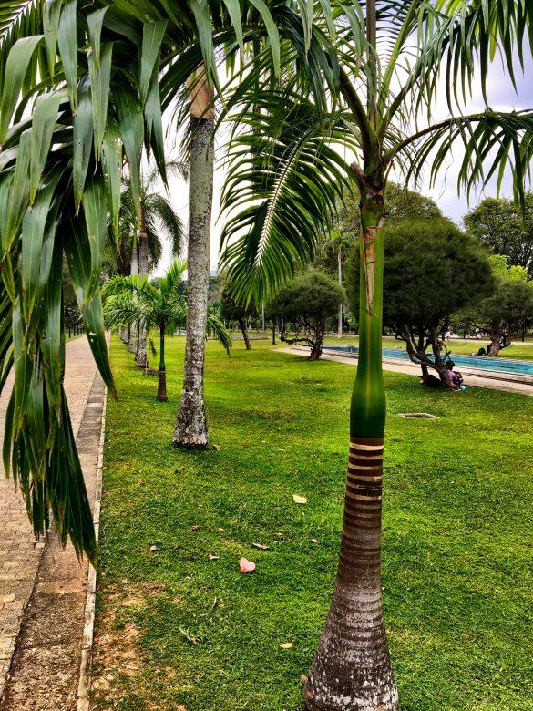 Palmen im Viharamahadevi Park