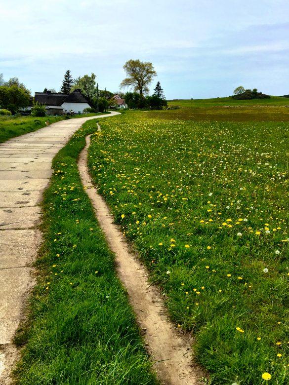 Küstenwanderweg im Norden von Hiddensee